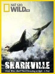 Vịnh Cá Mập - Sharkville